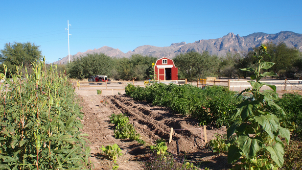 Tucson Village Farm in midtown Tucson.