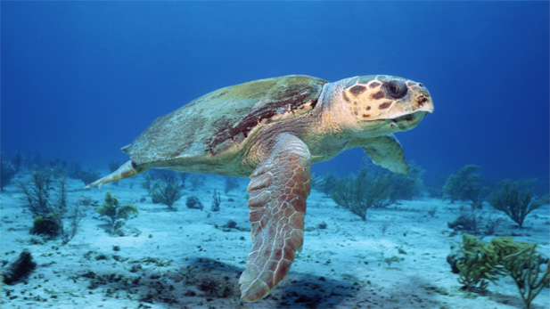 Nature Voyage of Lonely Turtle