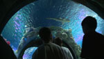 Desert Aquariums