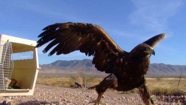 Tucson Wildlife Center_617x347
