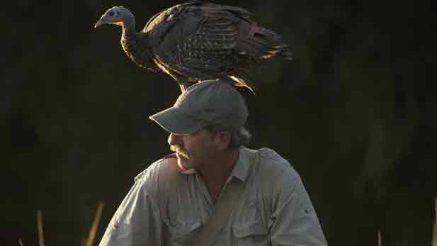 A turkey perches on Jeff Palmer's head.
