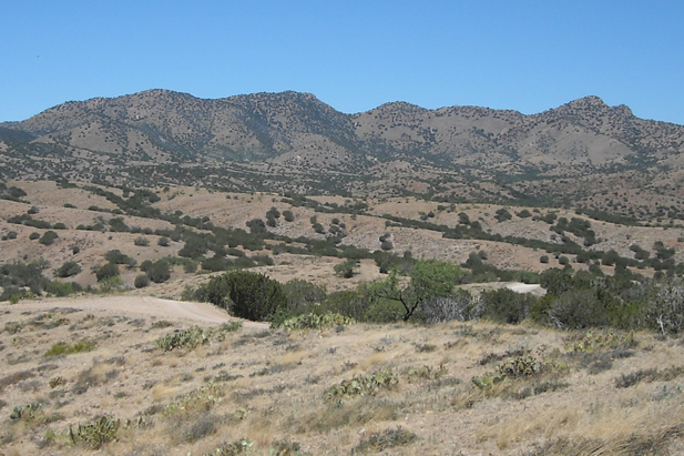 The scene in the northern Santa Rita Mountains where Rosemont Copper Mine is proposed.