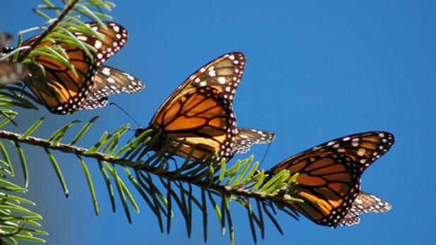 nova_monarchs_resting617x347