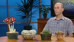 Kimberly Craft interviews Mark Dimmitt from the Tucson Cactus and Succulent Society to discuss the effects of cold weather on native plants.