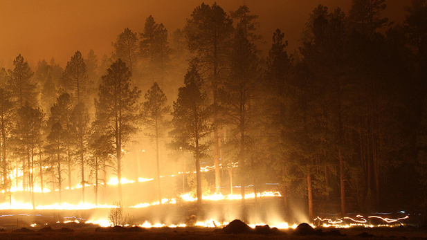 Over 3,000 firefighters battled Arizona's record-breaking Wallow Fire.