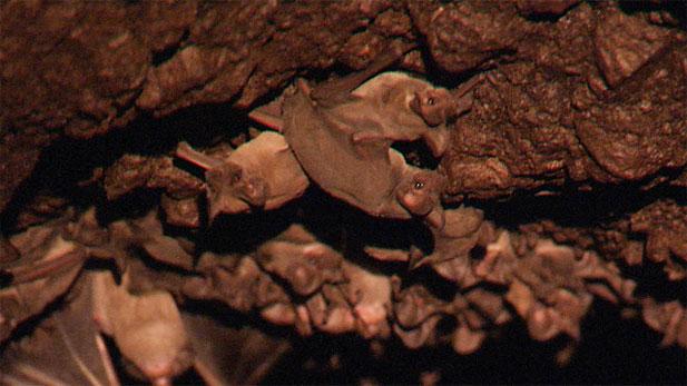 Thousands of migratory bats reside under Tucson bridges during the summer months.