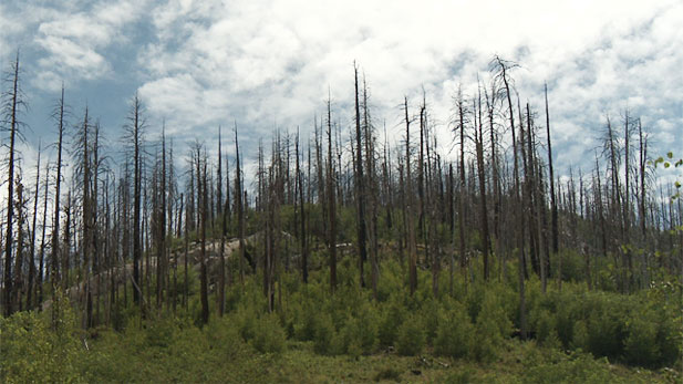 Atop Mount Lemmon, north of Tucson, remnants of wildfire.
