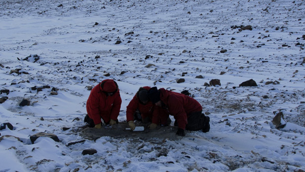At Mt. Boreas in the Dry Valleys, Peter Webb, Adam Lewis and David Harwood excavate freeze-dried mosses.