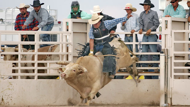 "Attendees of the Rex Allen Days celebration watch a bull rider at the professional rodeo. 2011 marks the 60th year of the event that honors the ""singing cowboy"" from Wilcox, Arizona."