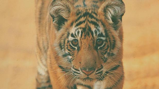 nature_brkn_tail_cub_spot
