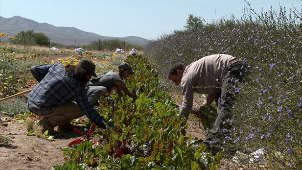 Immigrants picking vegetables spot
