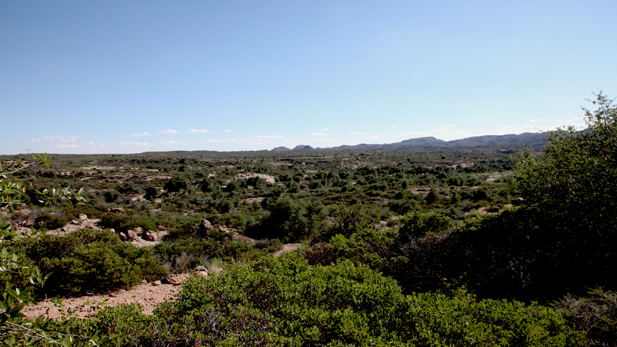 Oak Flat, in the Tonto National Forest east of Superior. Resolution Copper Mining has proposed building a large underground copper mine at the site.