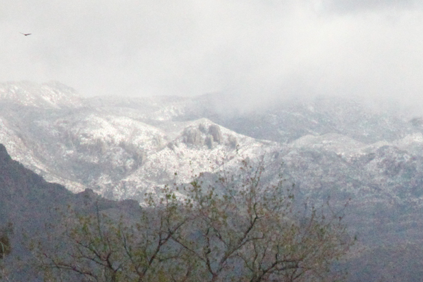 Snow on the upper reaches of the Santa Catalina Mountains, after a recent winter storm.