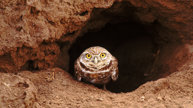 nature_animal-home_owl_spot