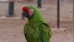Just one of the seven hundred plus birds at the Oasis Parrot Sanctuary.