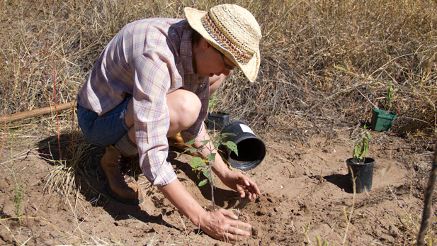 Bethany Brandt presses the air from the soil around the roots of a young plant at Deep Dirt Farm in Patagonia, Ariz. Brandt helps monitor the progress of the vegetation as a volunteer with Borderlands Restoration.