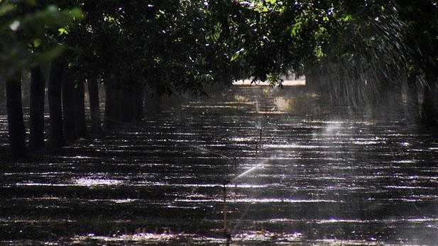 Orchard Sprinkler System SPOT