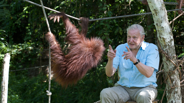 attenborough_with_orangutan_spot