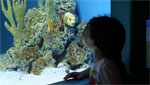 A young visitor gazes at a fish inside the new Arizona Sonoran Desert Museum Aquarium.