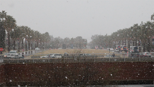 Large snowflakes fell over Tucson for about an hour Wednesday.