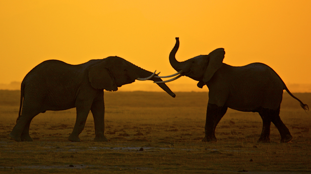 battle_elephants_greet_spot