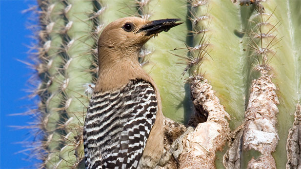 Woodpeckers are only one of the local species of birds that nest during the month of March.