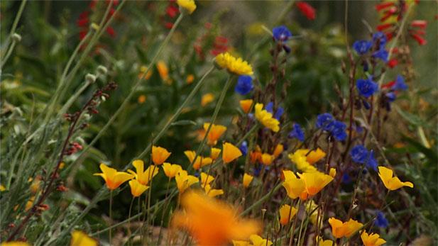 Wildflowers spot