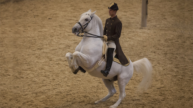 nature_wht_stallions_levade_spot