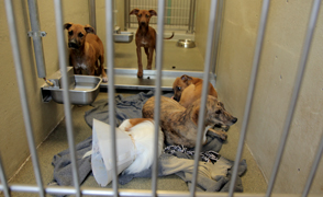 Dogs at the Pima Animal Care Center