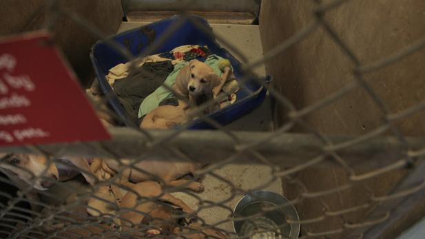 Puppies at Pima Animal Care Center