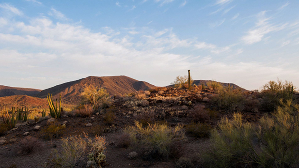 Organ Pipe National Monument is in the middle of conflict among border law enforcement, the environment, and park visitors due to the environmental impact of border security and enforcement policies
