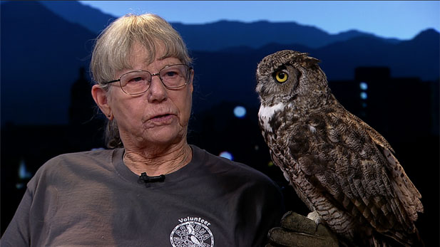 Christie Van Cleve, a licensed raptor rehabilitator, shows off an owl.