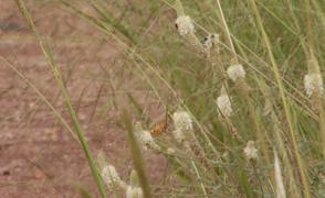Grasslands large