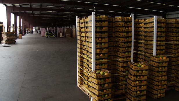 Fresh fruit sits on the loading dock of Mariposa Port, ready for inspection.