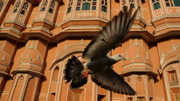 arthflight_asia_dove-india_spot