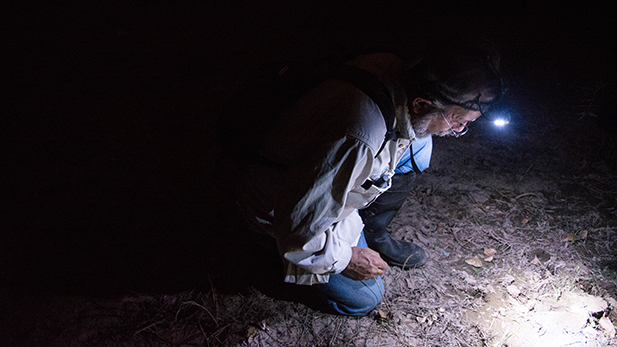 Phil Rosen, a University of Arizona herpetologist, is searching for signs of frogs.