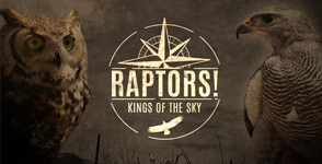 Raptors! Kings of the Sky