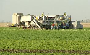 Farmers in Yuma fcs lrg