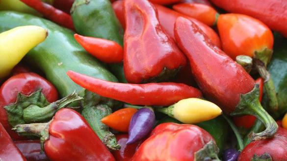chilie diversity spotlight