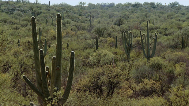 Just a small portion of the Saguaro National Forest conservation area.