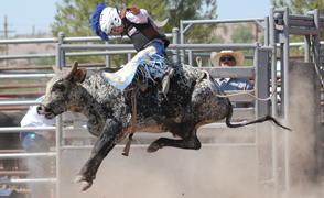 Bull-Rider_Sawyer_294x180