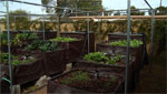 An aquaponics garden.