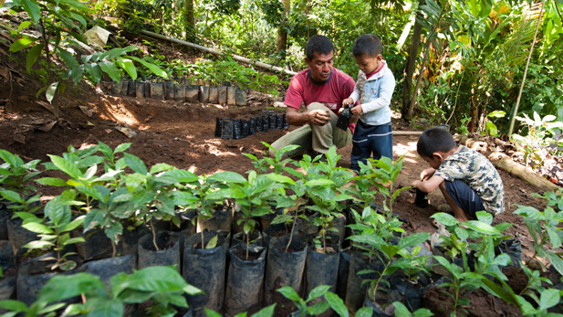 Genaro Mendez's sons help him plant coffee seedlings in Chiapas that could end up sold in Tucson