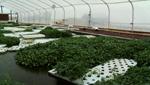 This is one of the many aquaponic set ups at Tucson AquaPonics Farm.