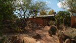 This is just one of the many diverse gardens owned by members of the Cactus Society is Tucson.
