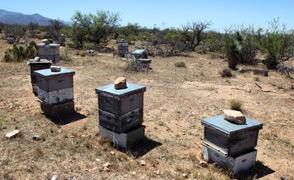 Bee Hive fcs lrg