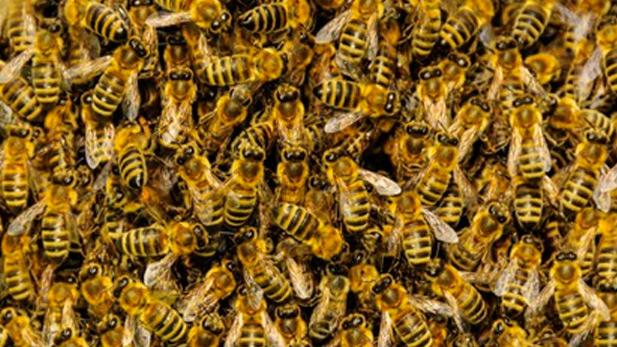 Bees spot