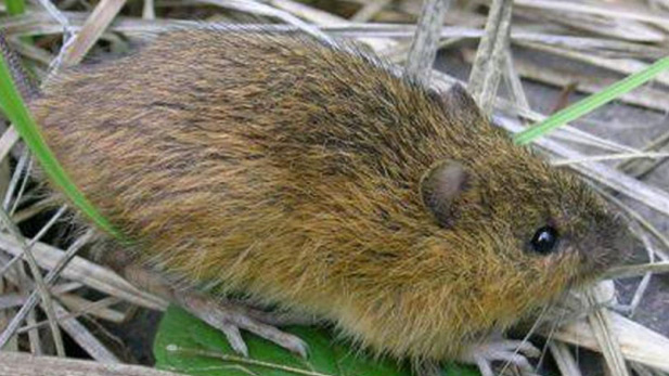 As of 2005, scientists say there were 29 surviving populations of the New Mexico meadow jumping mouse in the Southwest, but biologists say they believe there may be fewer now.