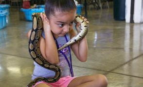 Summer Camp - Girl with Snake Fcs Lrg