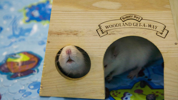 Summer Camp - Mouses Spot